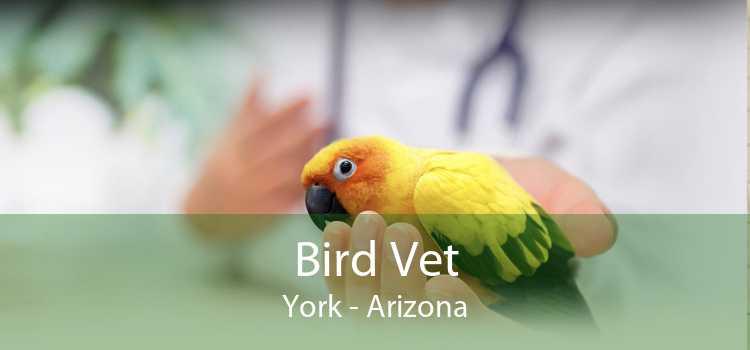 Bird Vet York - Arizona
