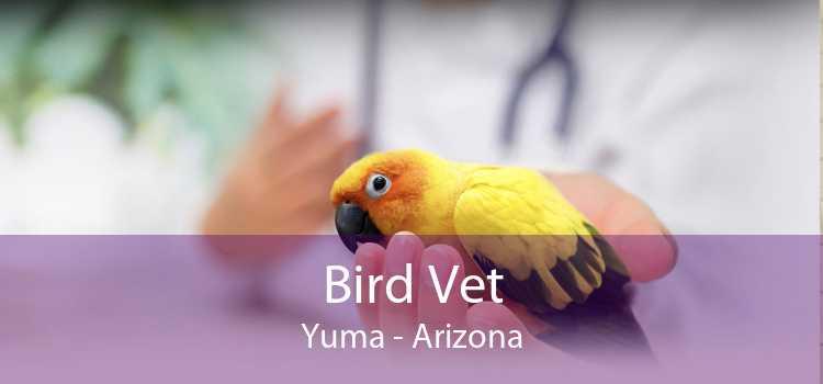 Bird Vet Yuma - Arizona