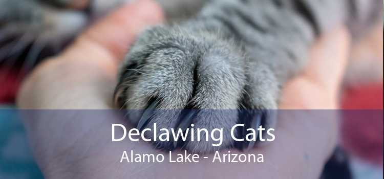 Declawing Cats Alamo Lake - Arizona