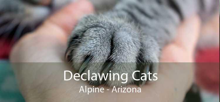 Declawing Cats Alpine - Arizona