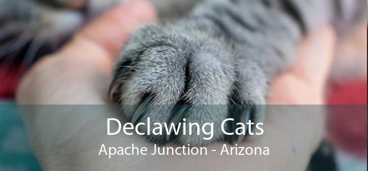 Declawing Cats Apache Junction - Arizona