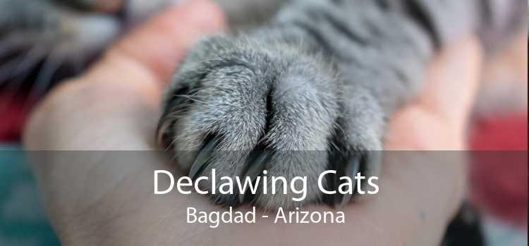 Declawing Cats Bagdad - Arizona