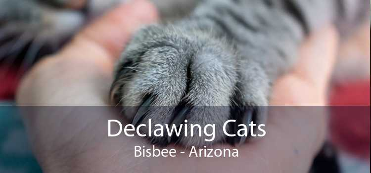 Declawing Cats Bisbee - Arizona