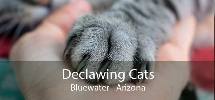 Declawing Cats Bluewater - Arizona