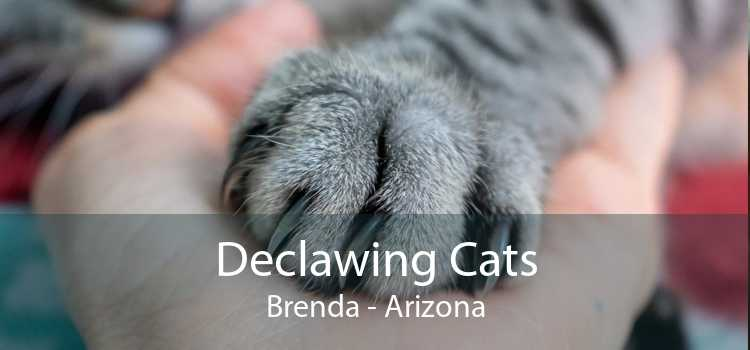Declawing Cats Brenda - Arizona