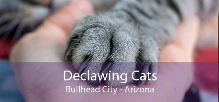 Declawing Cats Bullhead City - Arizona