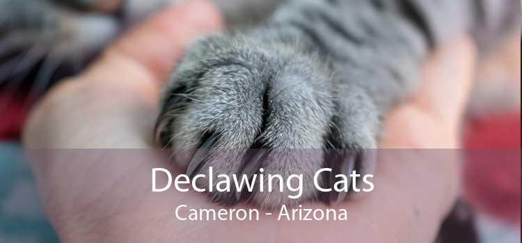 Declawing Cats Cameron - Arizona