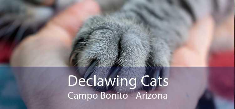 Declawing Cats Campo Bonito - Arizona