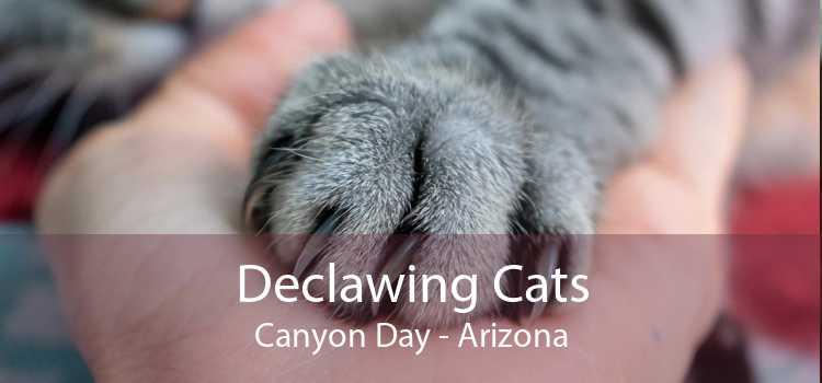 Declawing Cats Canyon Day - Arizona