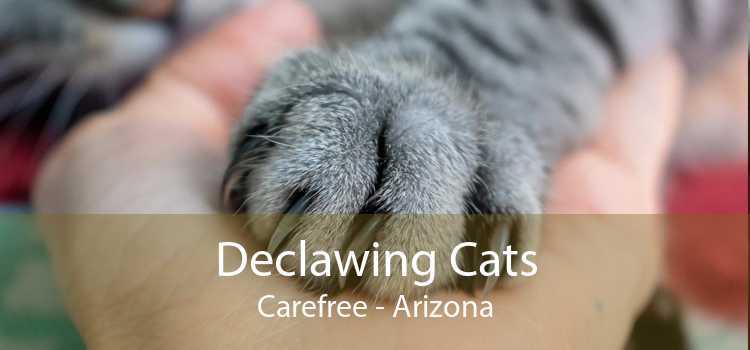 Declawing Cats Carefree - Arizona
