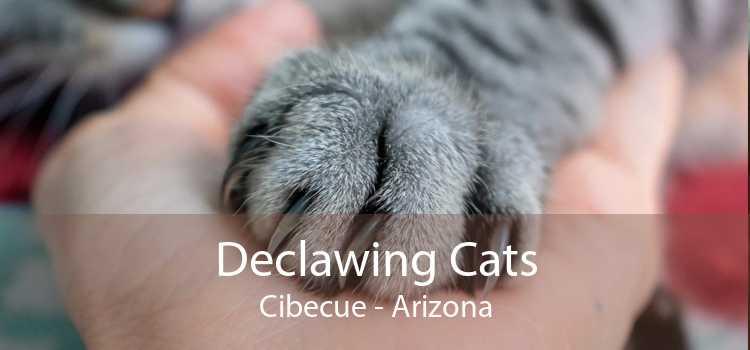 Declawing Cats Cibecue - Arizona
