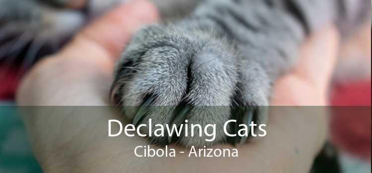 Declawing Cats Cibola - Arizona