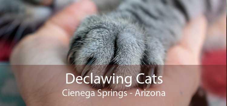 Declawing Cats Cienega Springs - Arizona