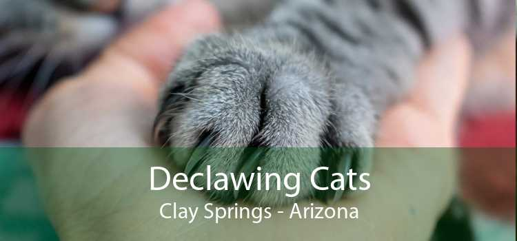 Declawing Cats Clay Springs - Arizona