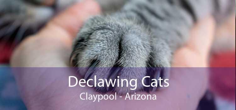 Declawing Cats Claypool - Arizona