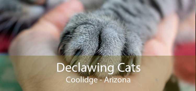 Declawing Cats Coolidge - Arizona