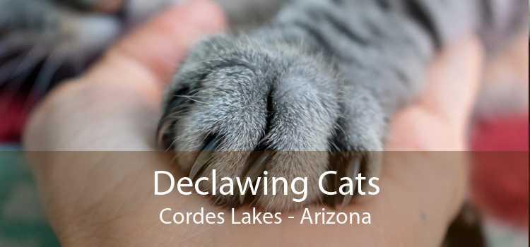 Declawing Cats Cordes Lakes - Arizona