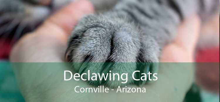 Declawing Cats Cornville - Arizona