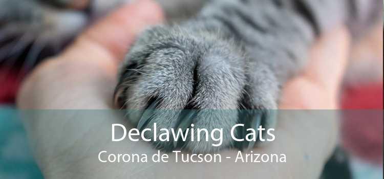 Declawing Cats Corona de Tucson - Arizona