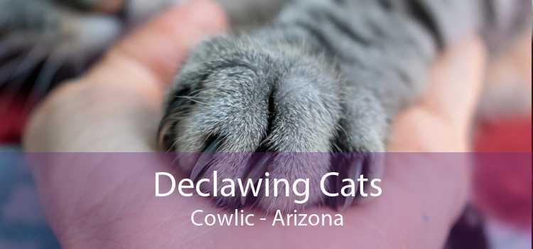 Declawing Cats Cowlic - Arizona