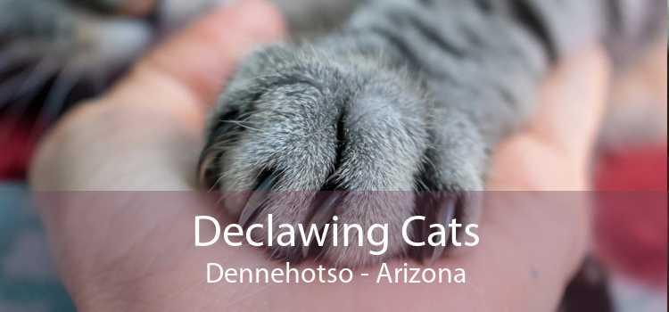 Declawing Cats Dennehotso - Arizona