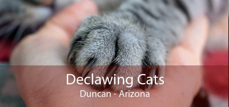 Declawing Cats Duncan - Arizona