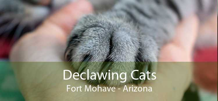 Declawing Cats Fort Mohave - Arizona