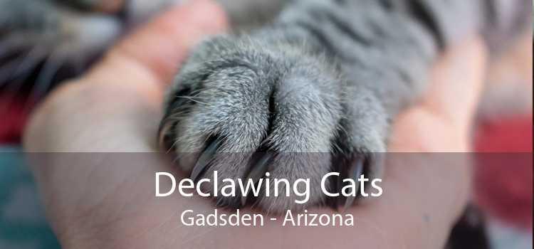 Declawing Cats Gadsden - Arizona