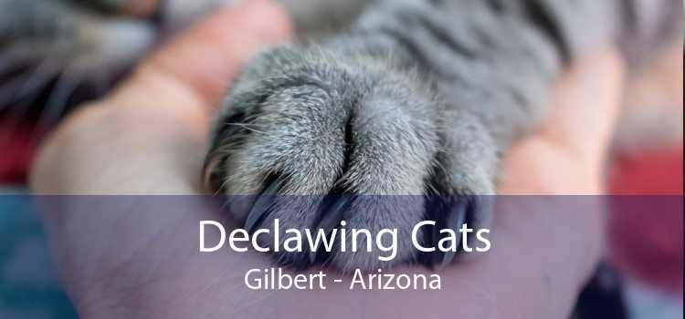 Declawing Cats Gilbert - Arizona