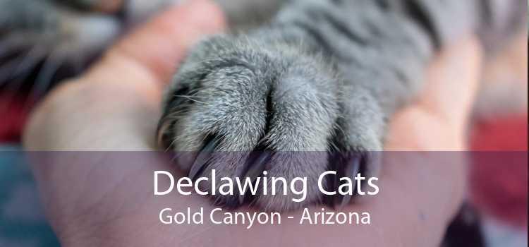 Declawing Cats Gold Canyon - Arizona