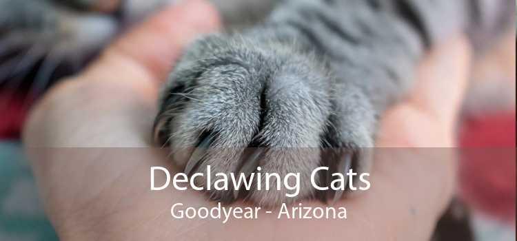 Declawing Cats Goodyear - Arizona