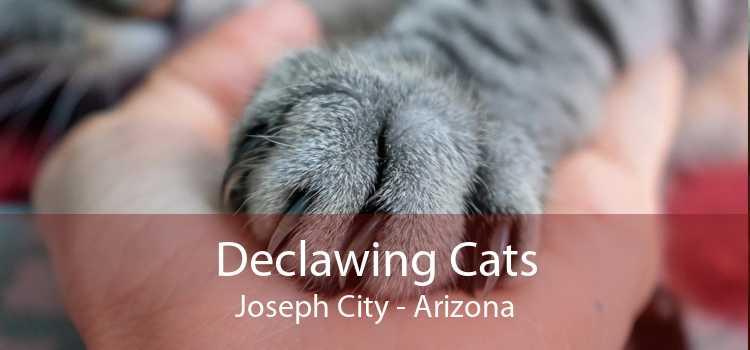 Declawing Cats Joseph City - Arizona