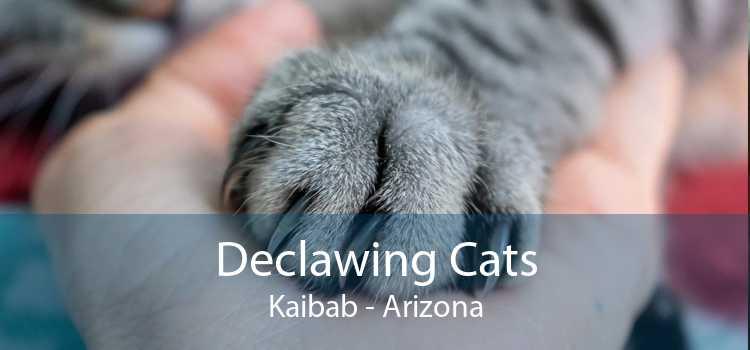 Declawing Cats Kaibab - Arizona