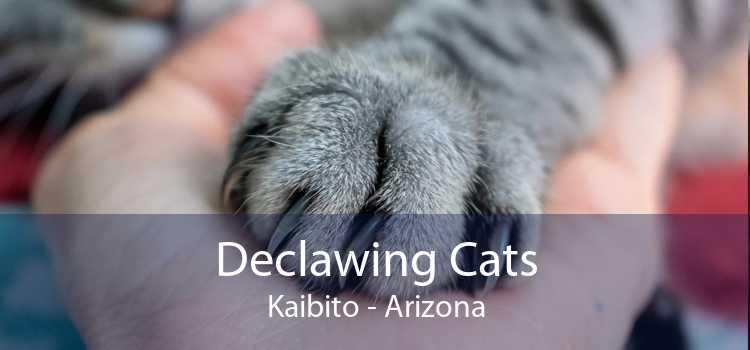 Declawing Cats Kaibito - Arizona