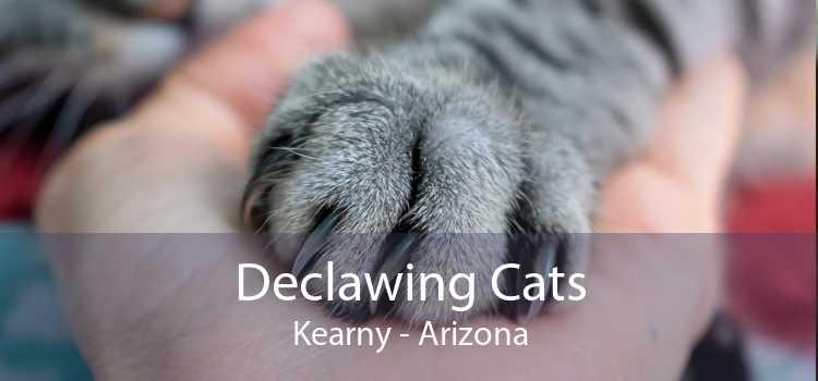 Declawing Cats Kearny - Arizona