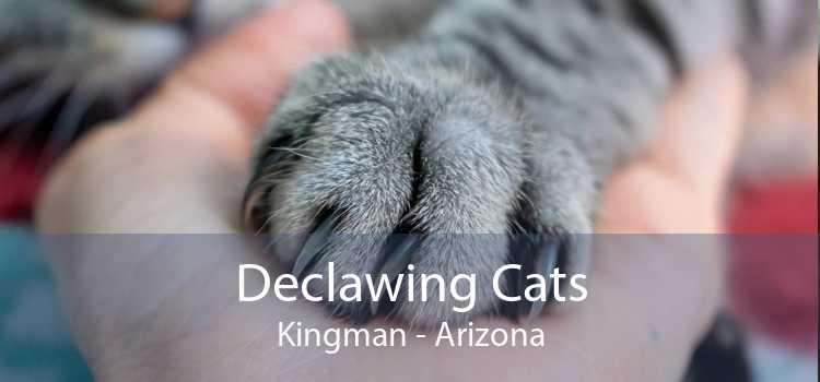 Declawing Cats Kingman - Arizona