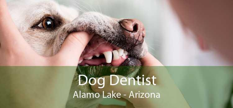Dog Dentist Alamo Lake - Arizona