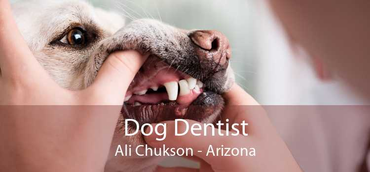 Dog Dentist Ali Chukson - Arizona