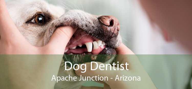 Dog Dentist Apache Junction - Arizona