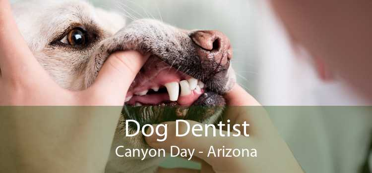 Dog Dentist Canyon Day - Arizona