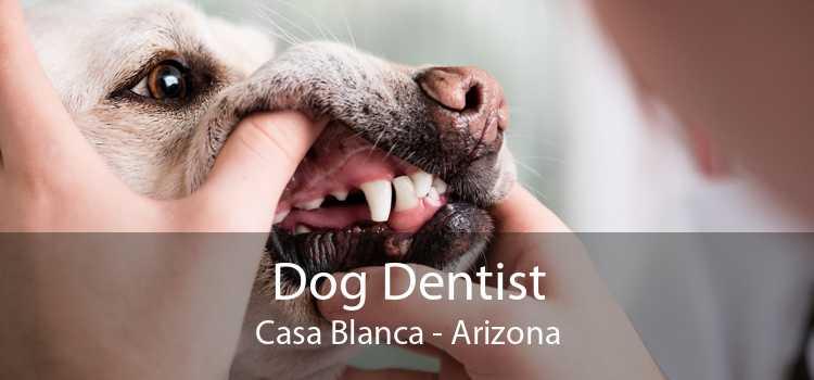 Dog Dentist Casa Blanca - Arizona