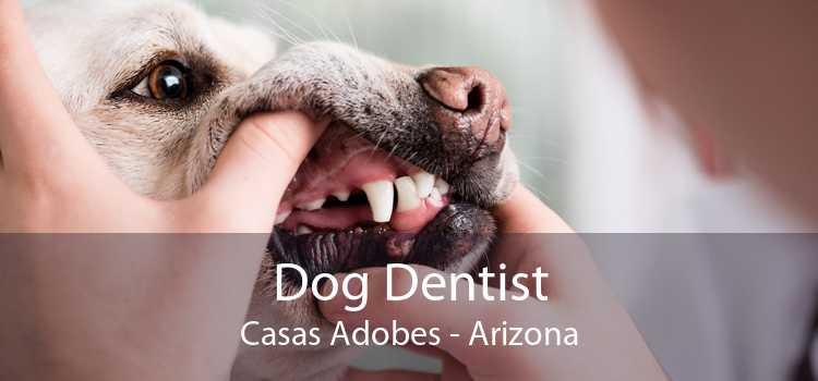 Dog Dentist Casas Adobes - Arizona