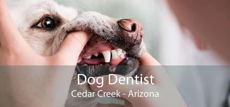 Dog Dentist Cedar Creek - Arizona