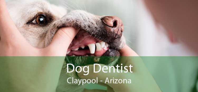 Dog Dentist Claypool - Arizona
