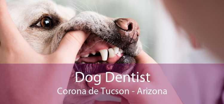 Dog Dentist Corona de Tucson - Arizona