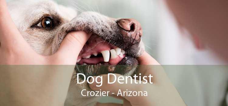 Dog Dentist Crozier - Arizona