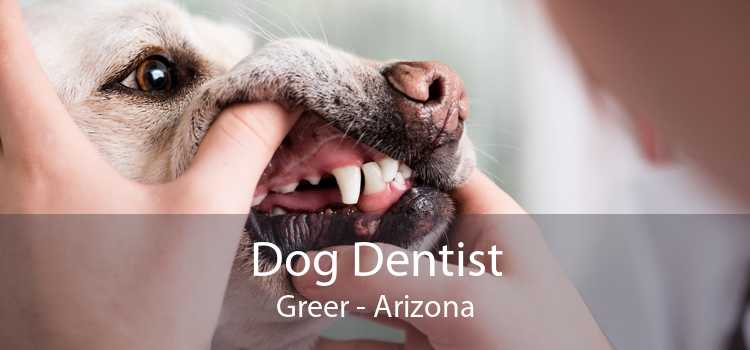 Dog Dentist Greer - Arizona