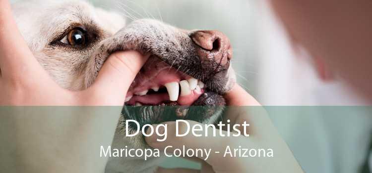 Dog Dentist Maricopa Colony - Arizona