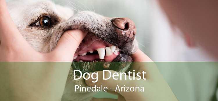 Dog Dentist Pinedale - Arizona