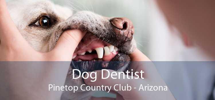 Dog Dentist Pinetop Country Club - Arizona